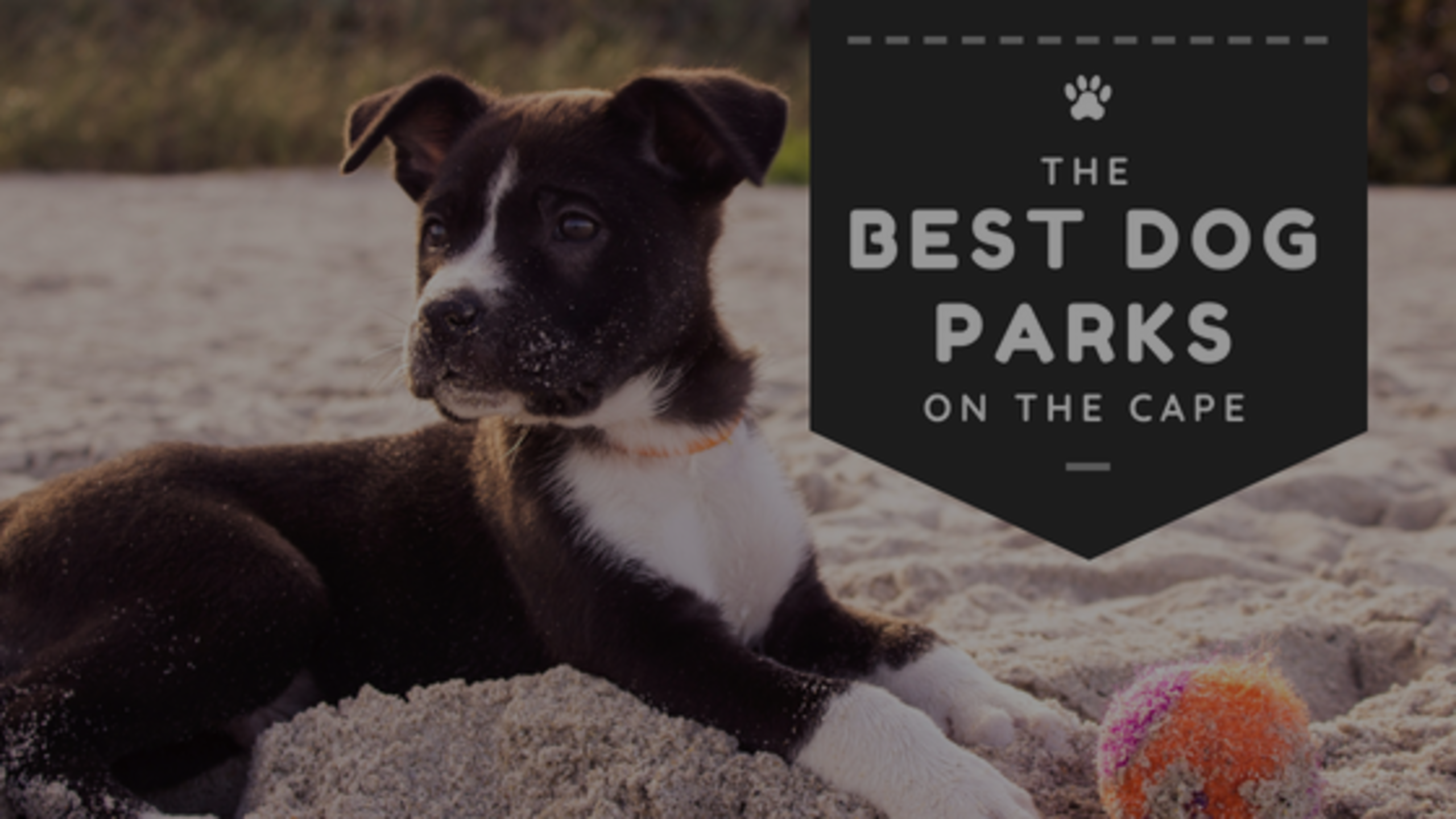 Best Dog Parks on the Cape 2018