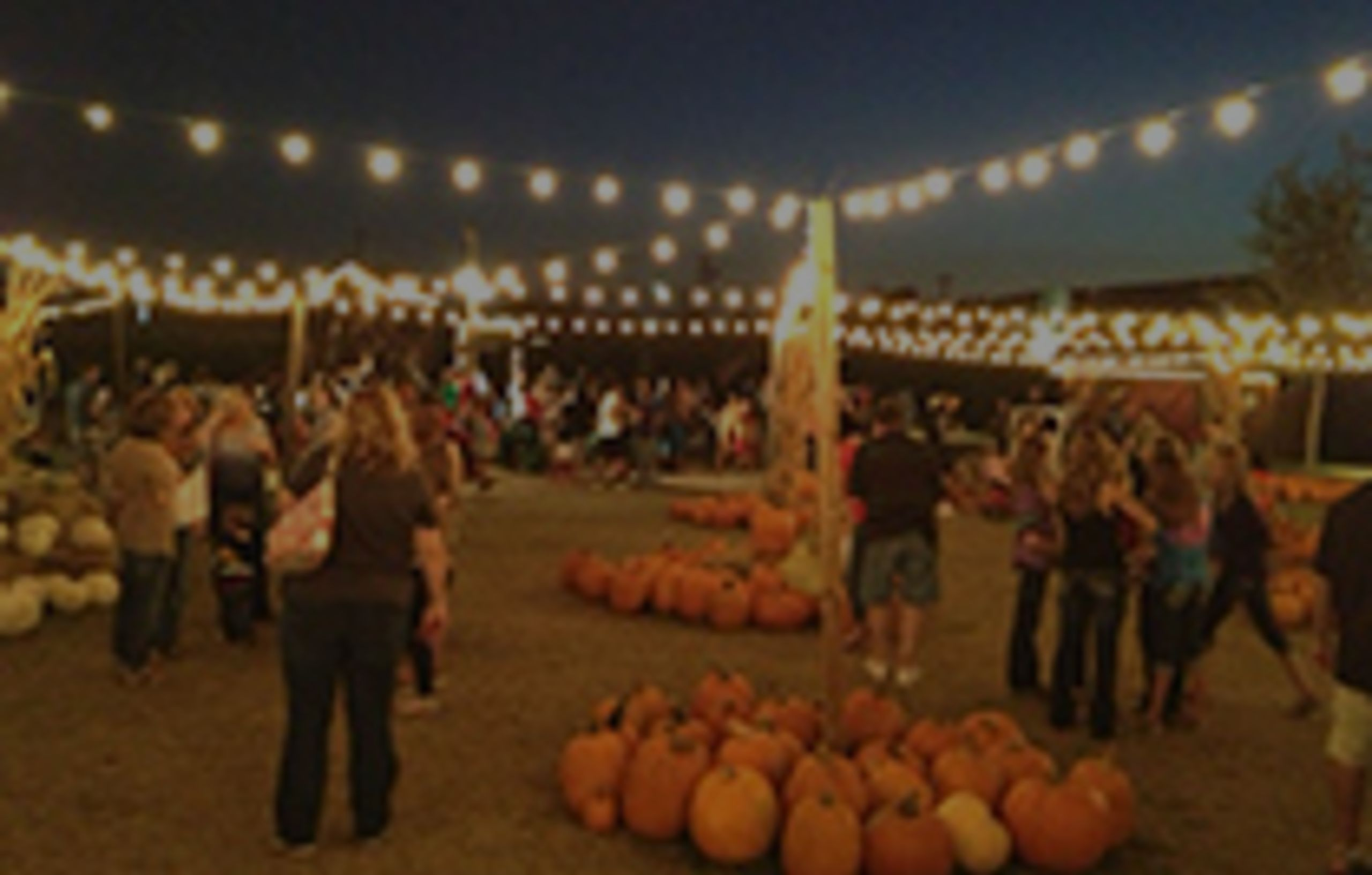 Hall's Pumpkin Patch
