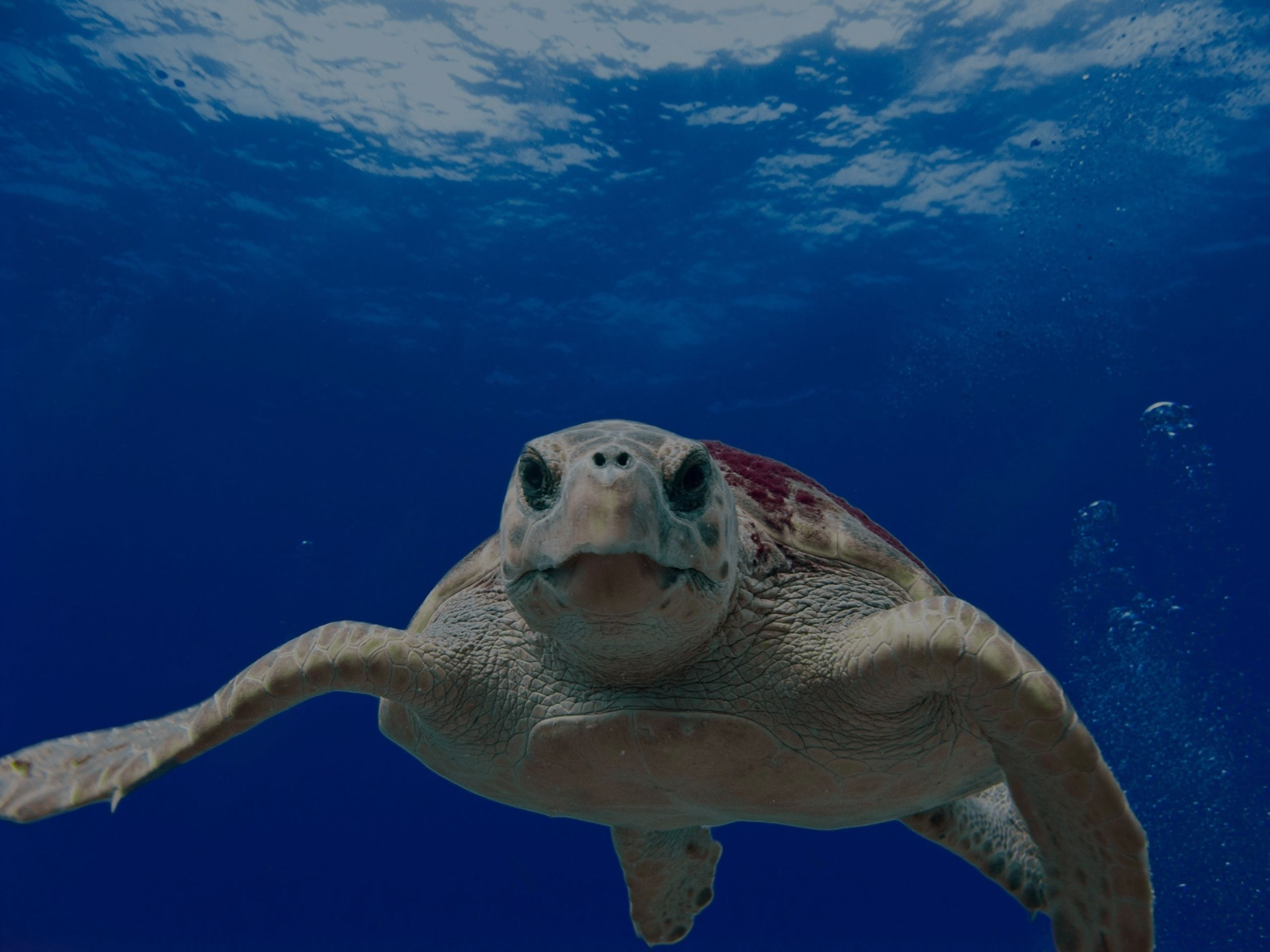 World Oceans Day Saturday, June 9th!