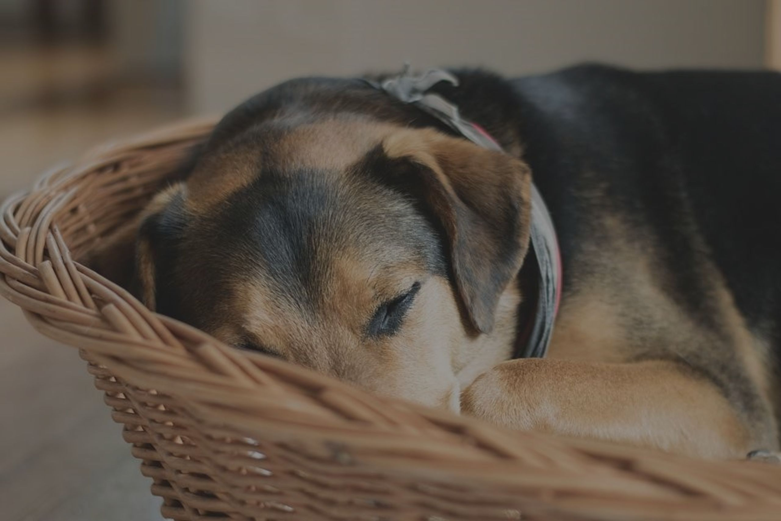 Helpful Tips For A Successful Relocation With Your Pets