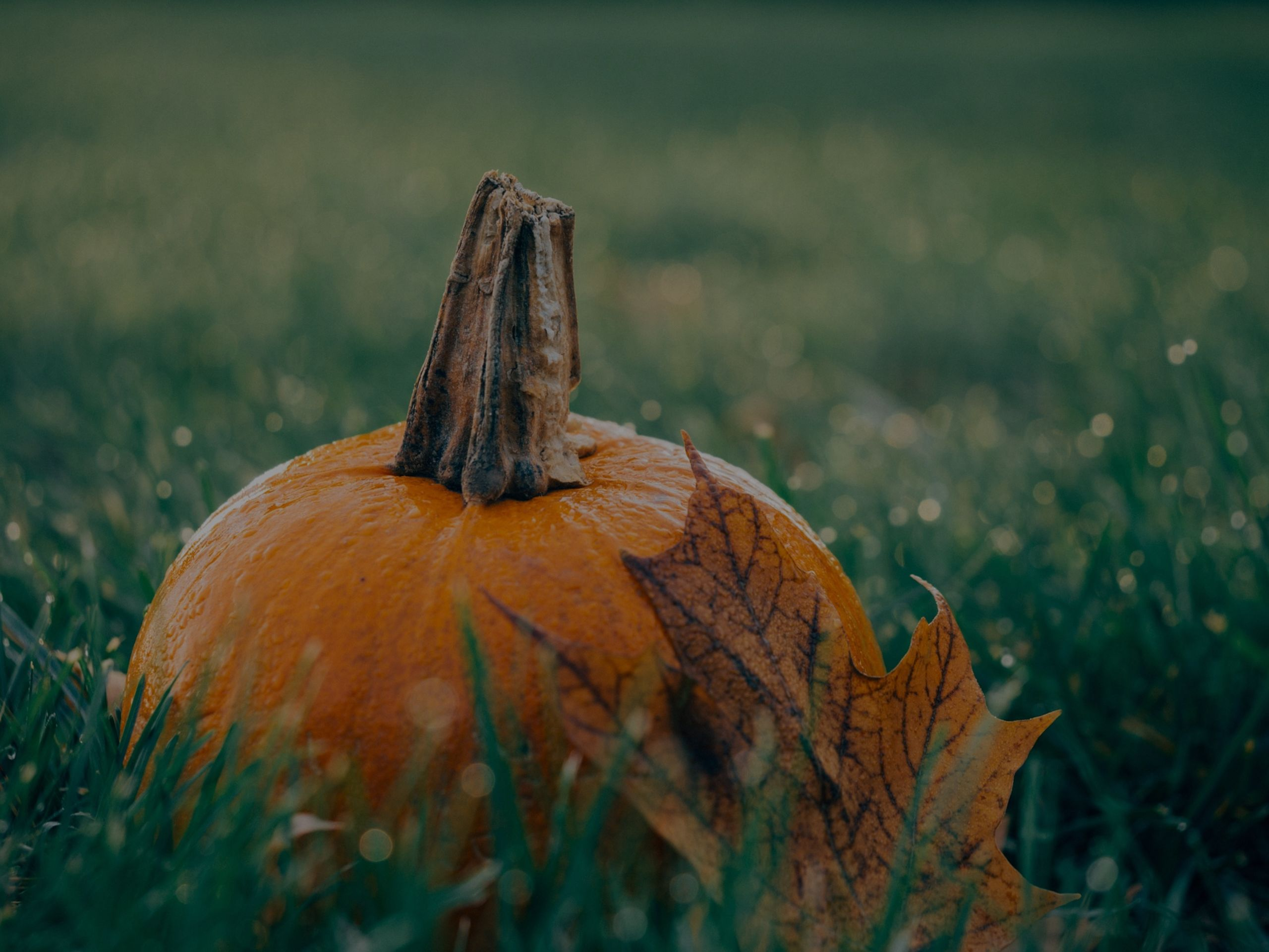 Featured October Lowcountry Events