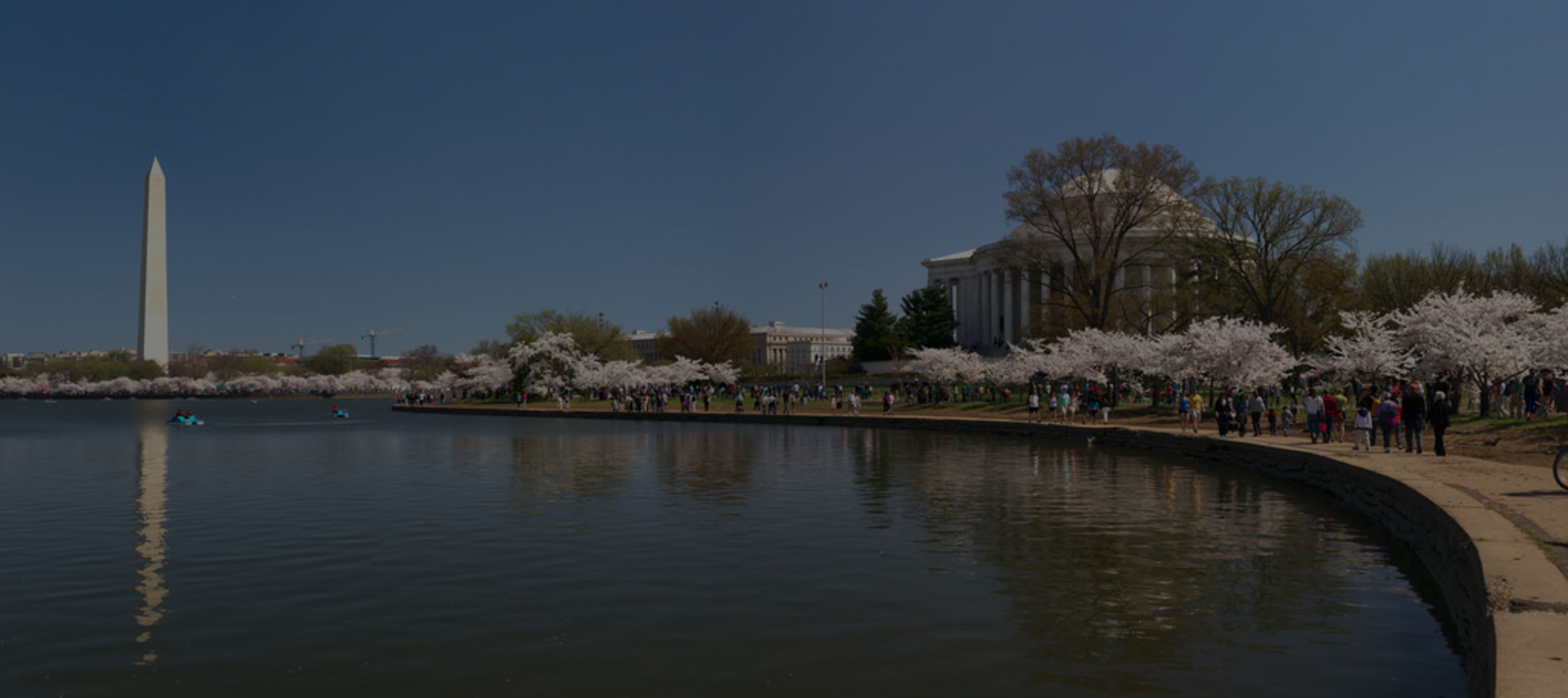 Cherry Trees in front of the Jefferson Memorial