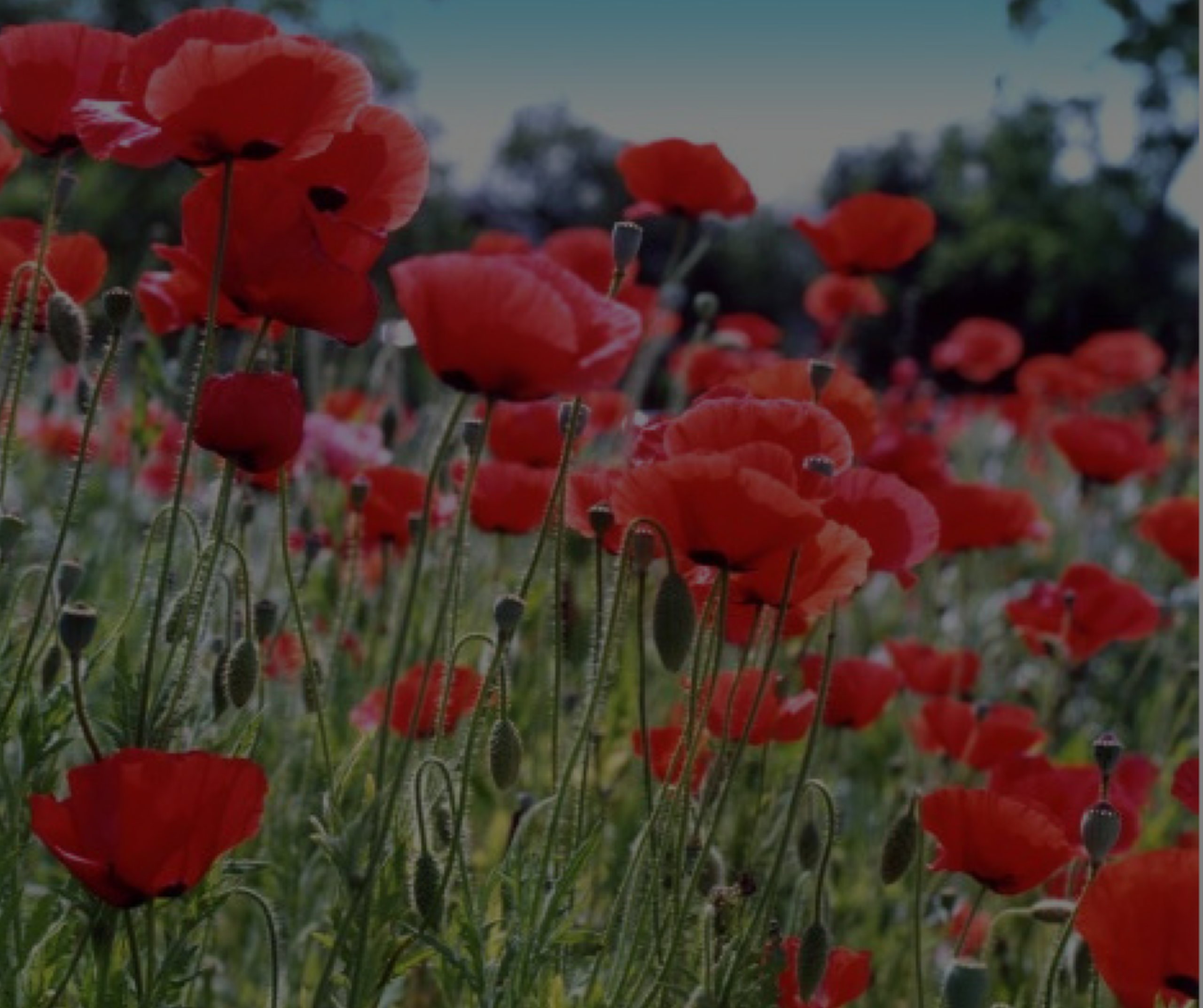 Georgetown, Tx - The Red Poppy Capital of Texas