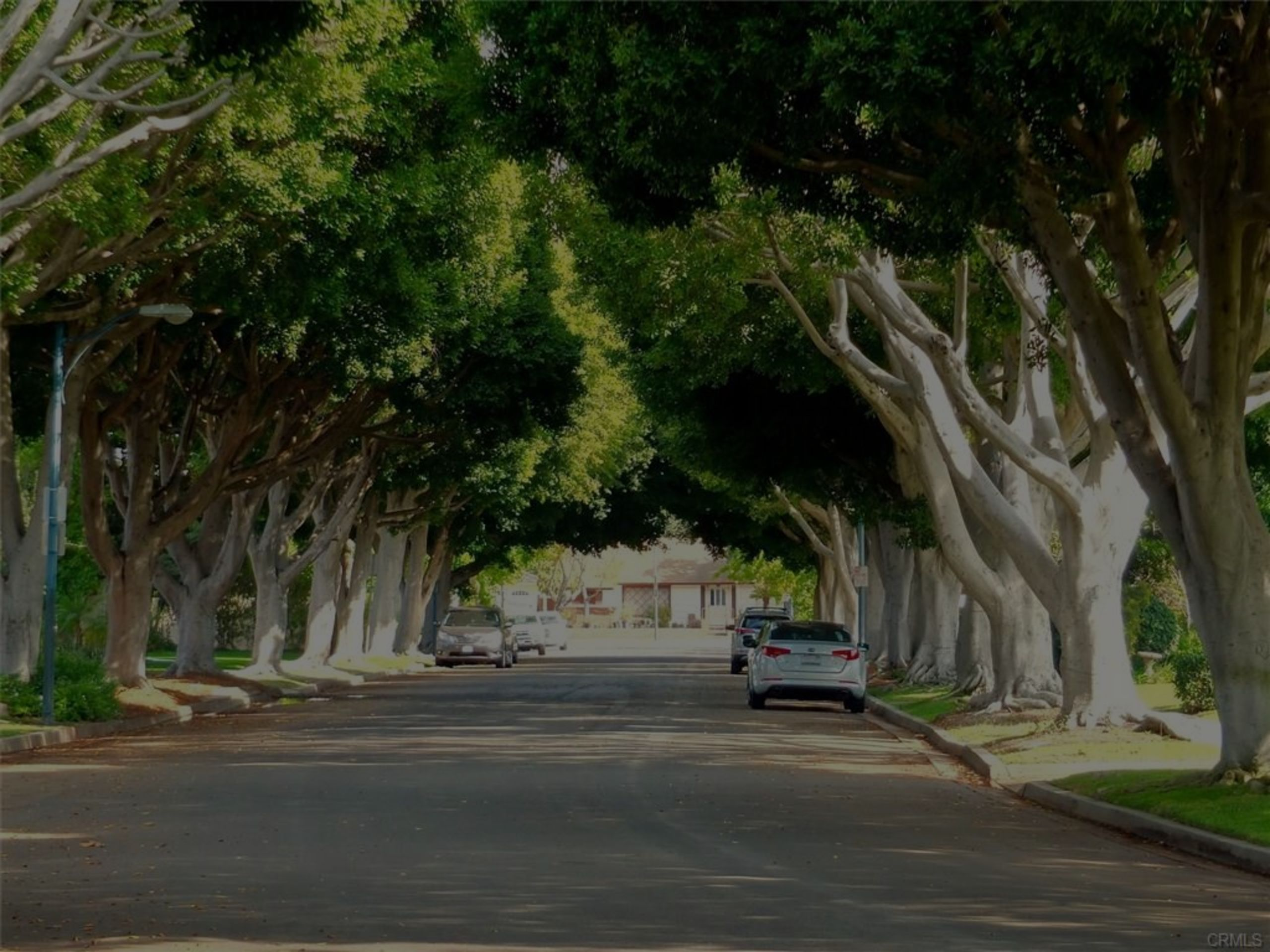 Gorgeous, Tree-Lined Streets