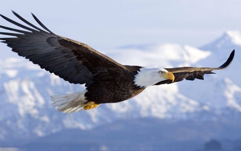 Eagle One Real Estate
