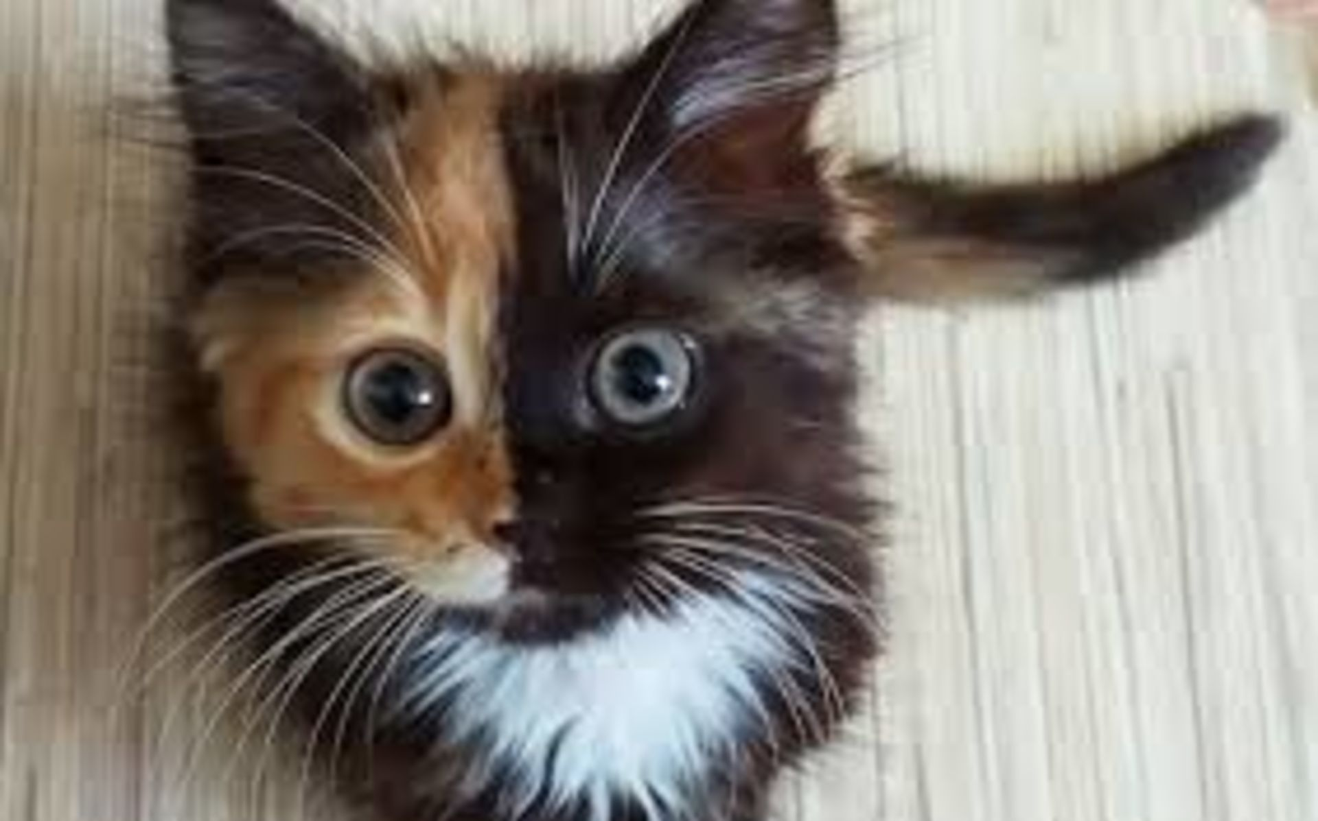 Louisville's first cat cafe opens