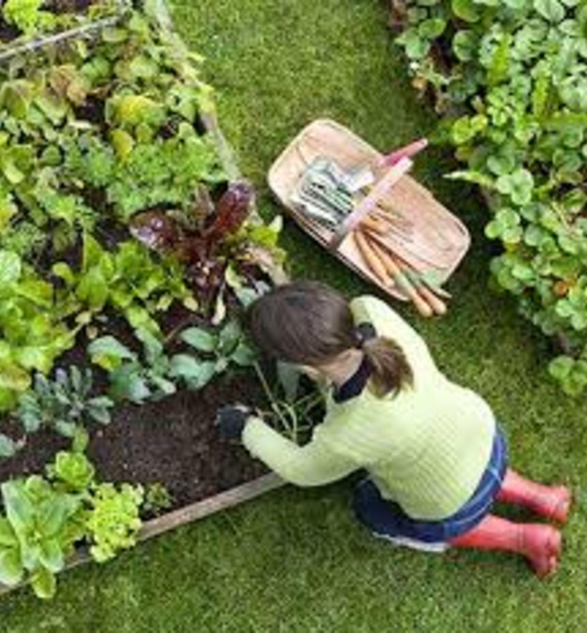 Want to start a garden?