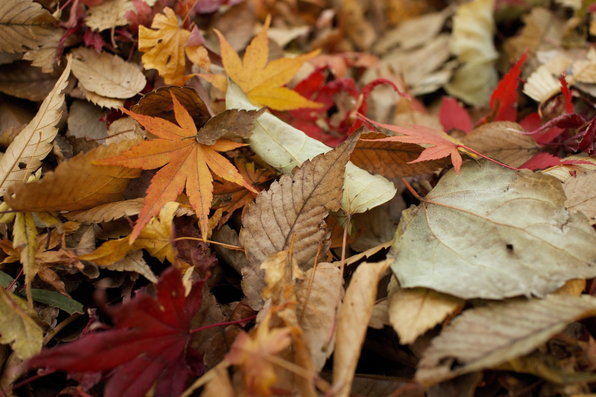 3 Reasons to Buy a Home in The Fall