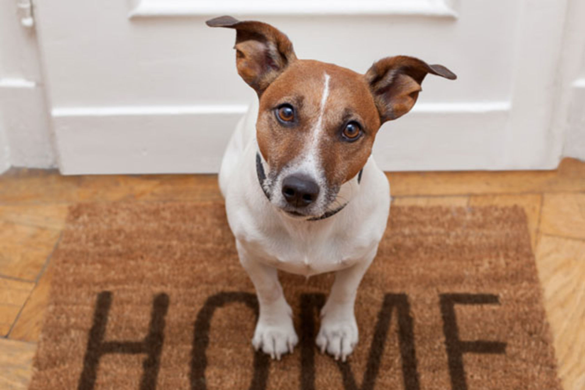 Guide to Buying a Pet-Friendly Home