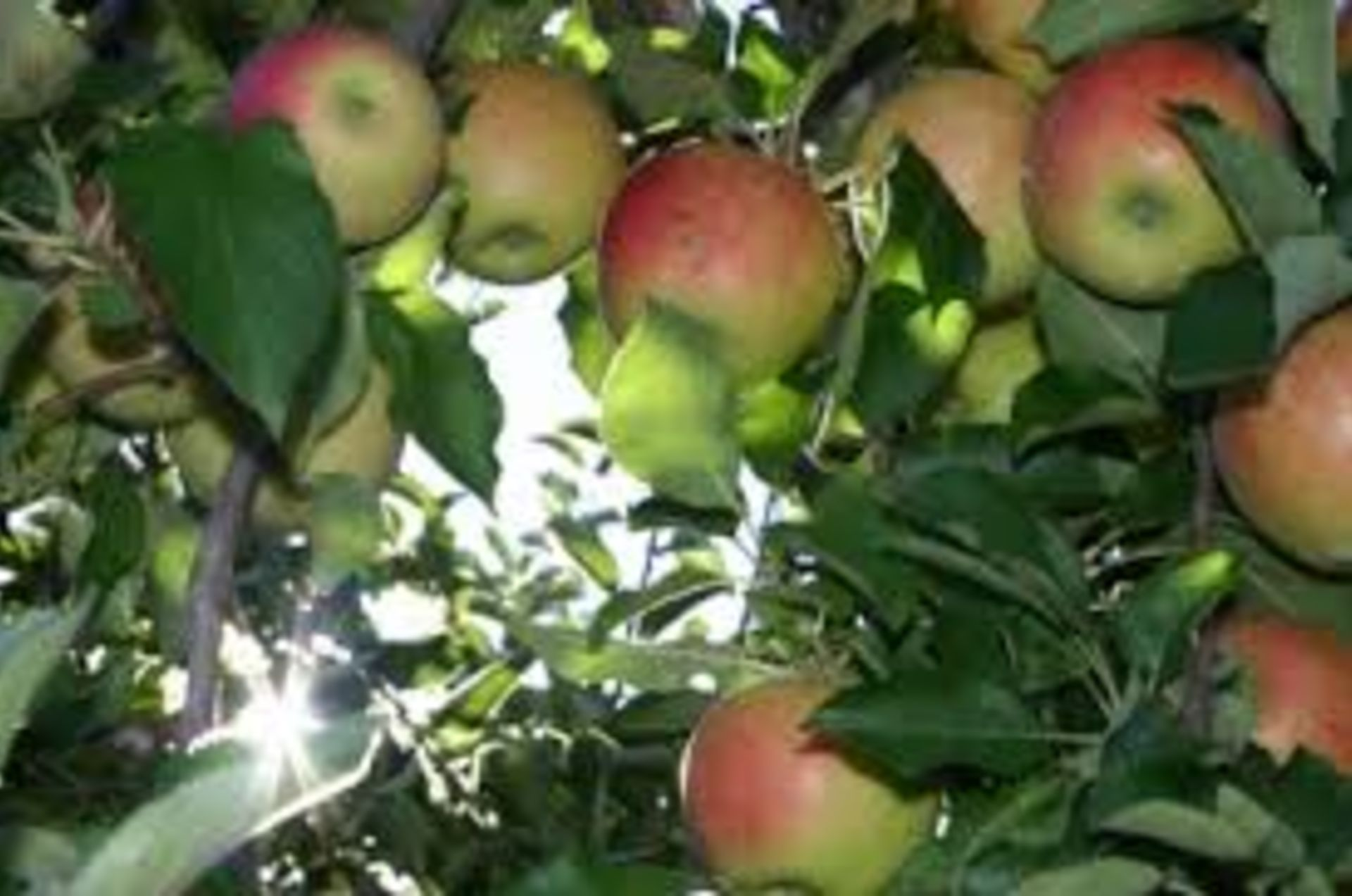 Don't Miss Out on Apple-Picking This Fall!