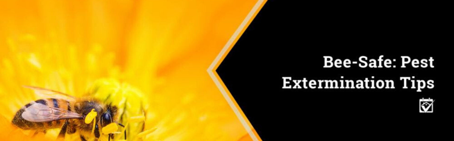 Bee-Safe: Pest Extermination Tips