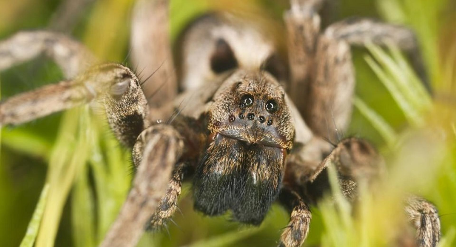 Controlling big honkin' spiders and other pests is imperative for Charlotte area home sellers and homeowners alike!