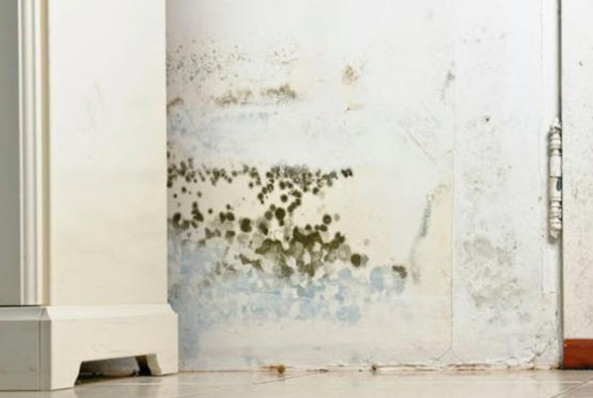 Local mold and rodent expert saves my home deals