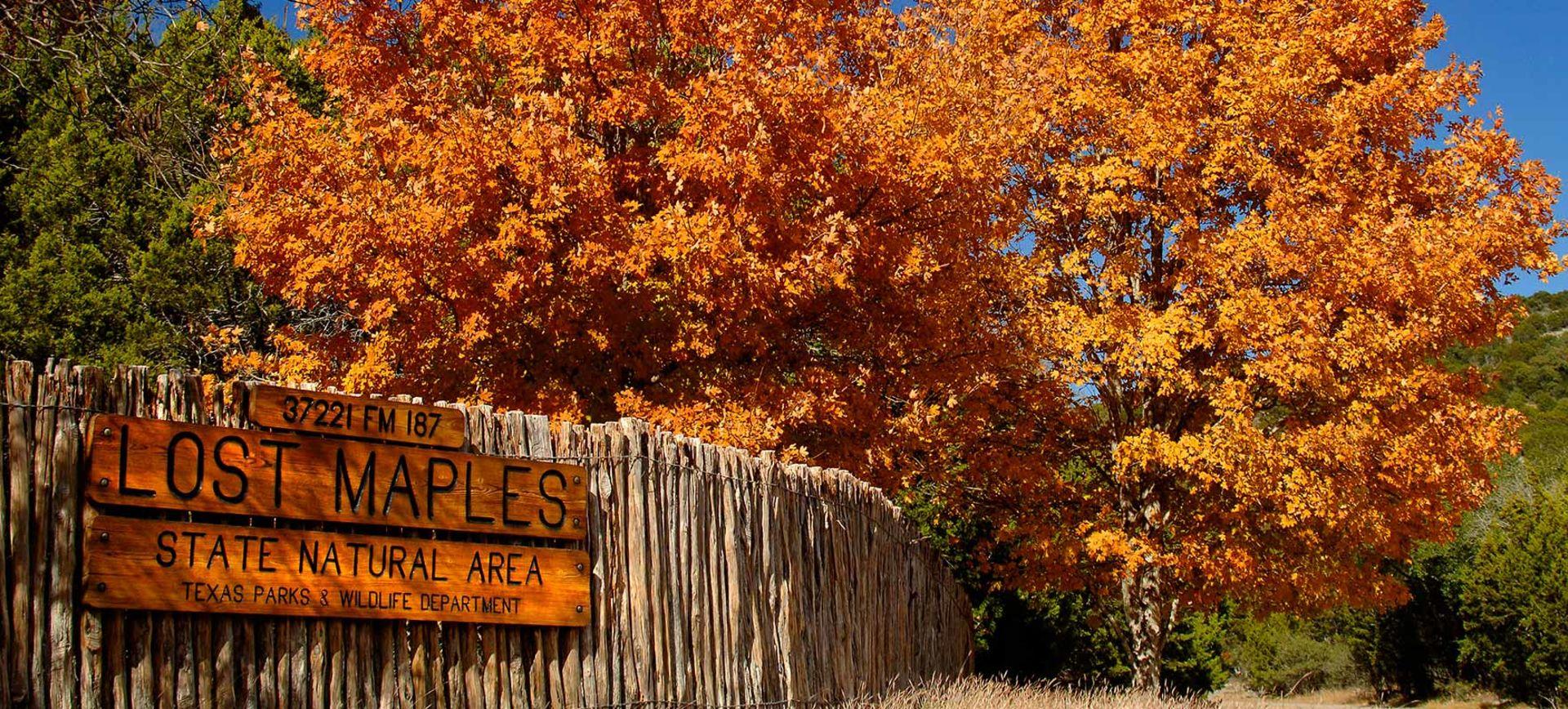 Fall Foliage in Texas?
