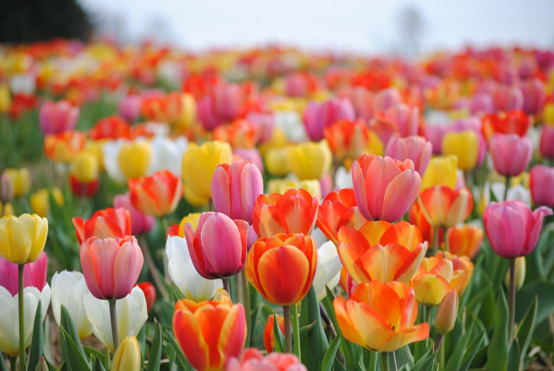 Spring Maintenance Checklist