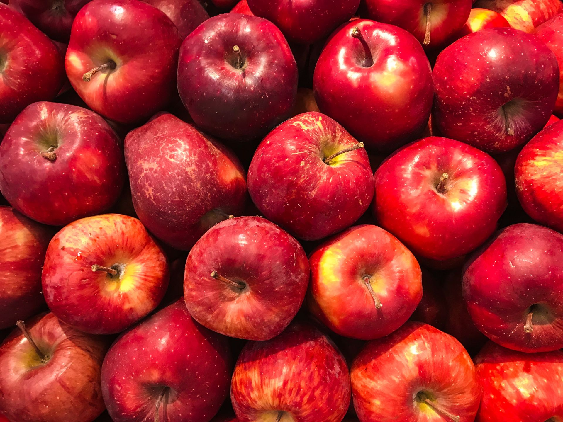 LST Favorite Apple Picking Locations