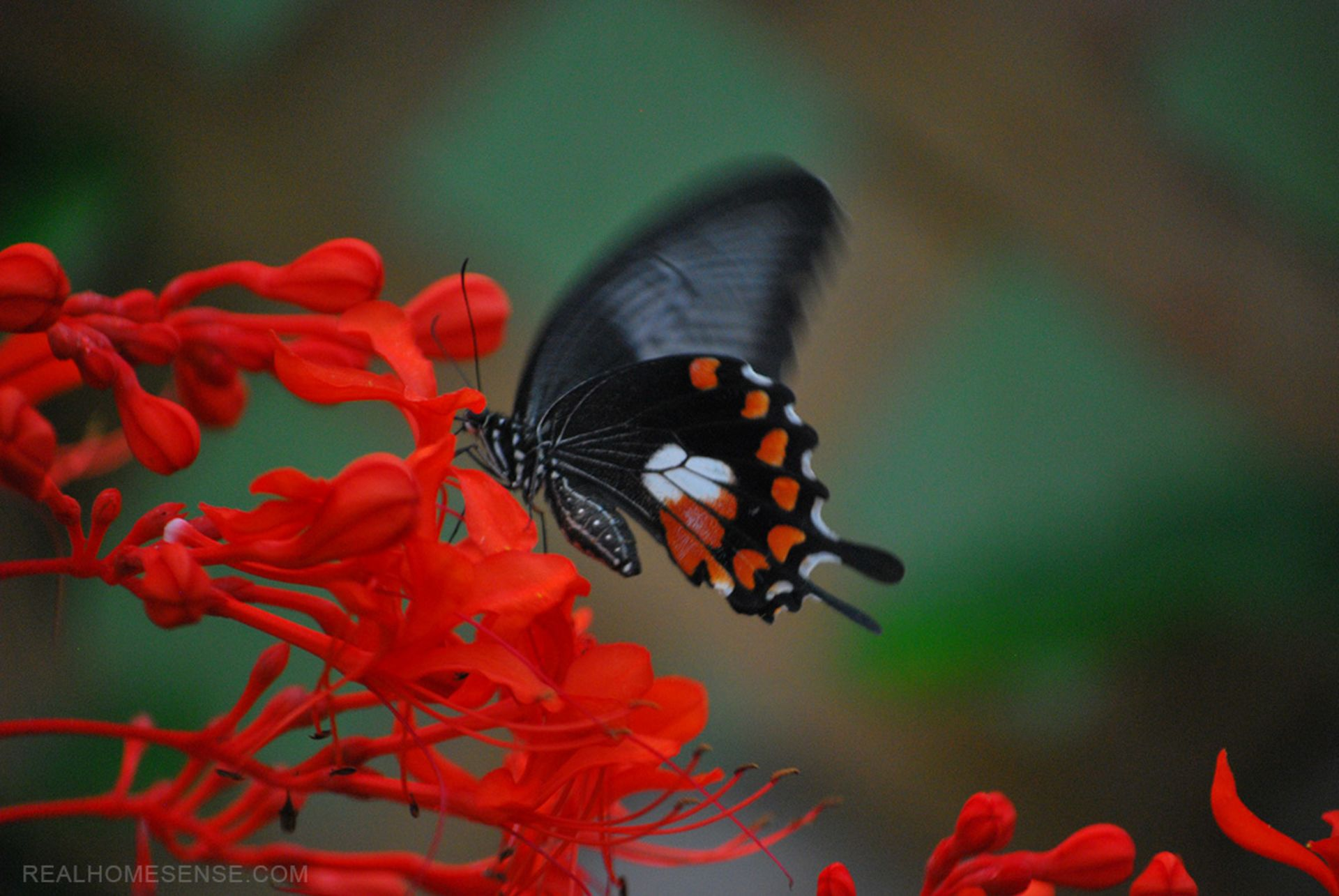 Take an Early Leap into Spring at the Franklin Park Conservatory!