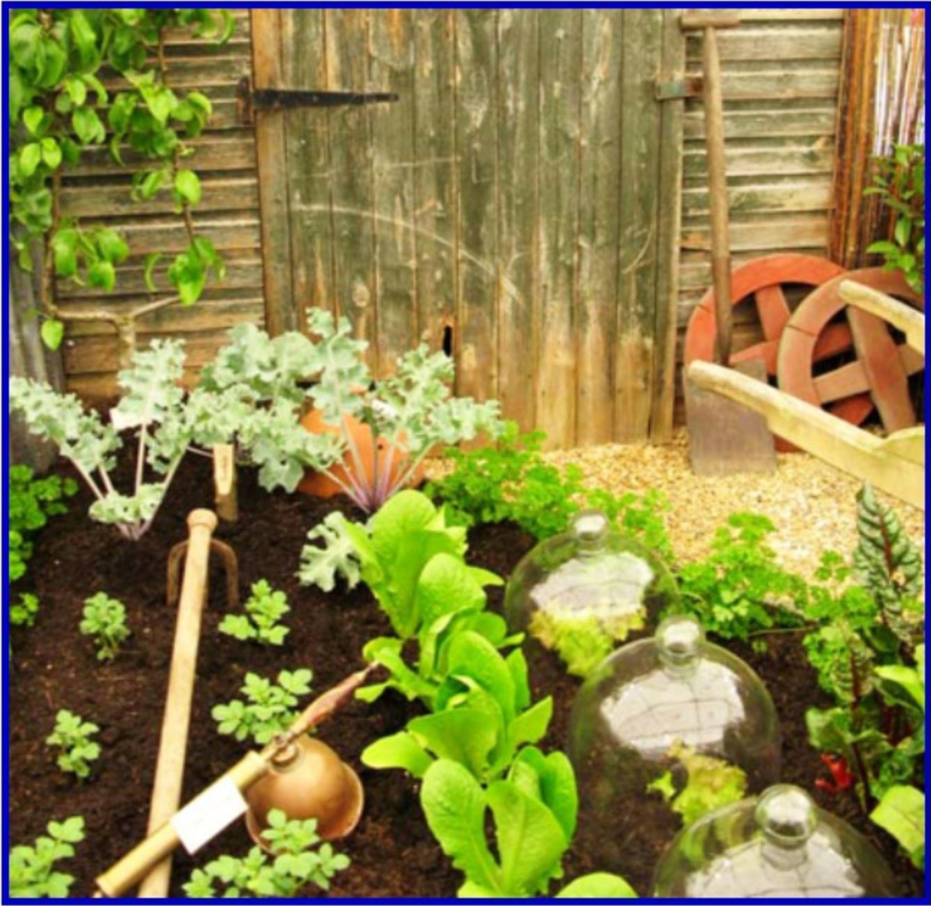 Planting Your Own Vegetable Garden