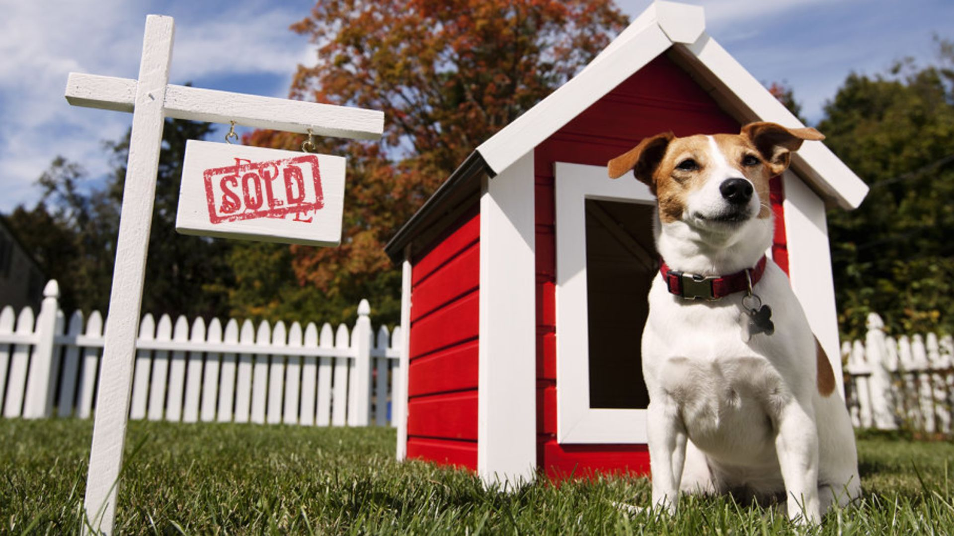 IN THE DOGHOUSE: TIPS FOR HOMEOWNERS WITH DOGS