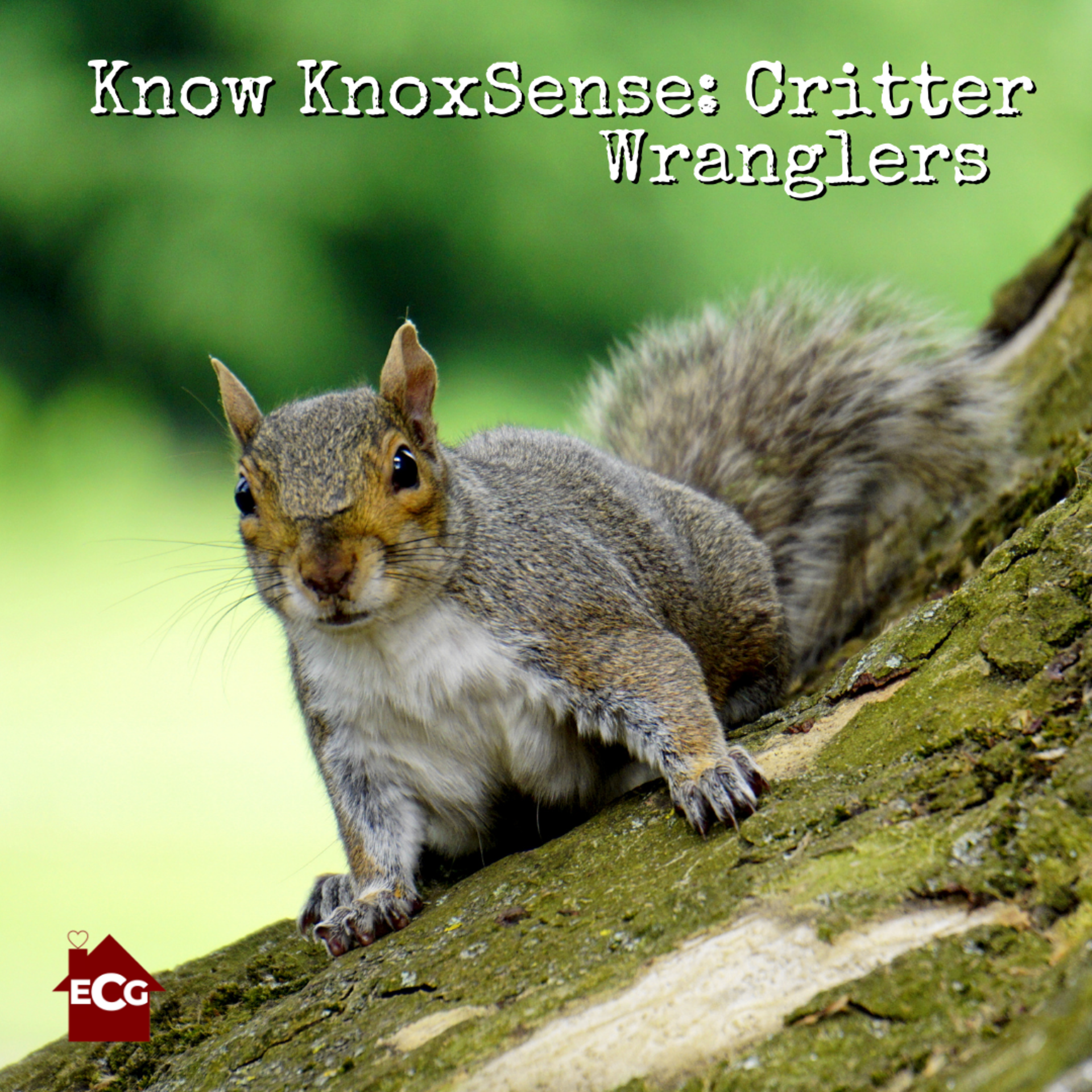Know KnoxSense: Critter Wranglers