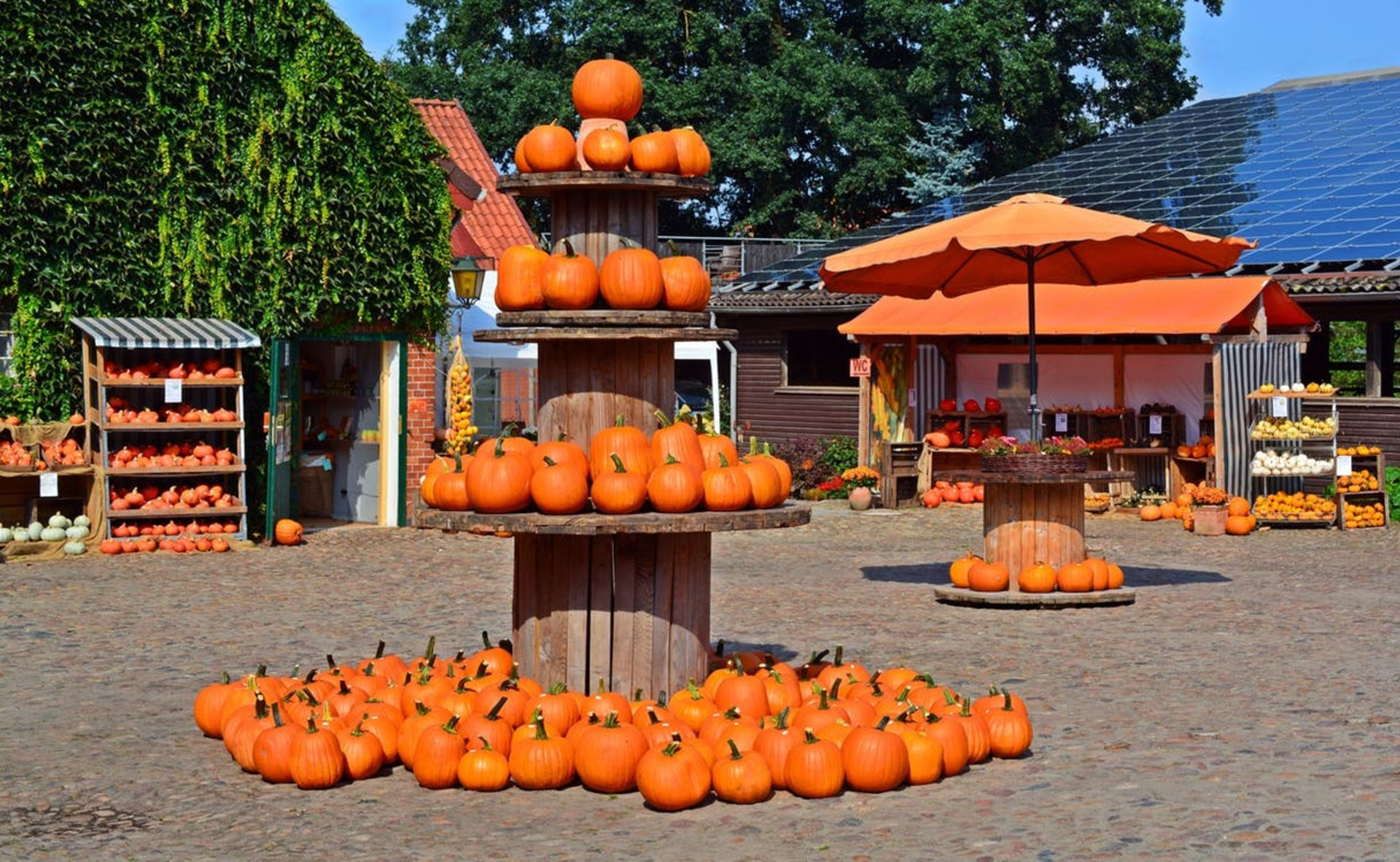Colorado Springs Pumpkin Patches and More!