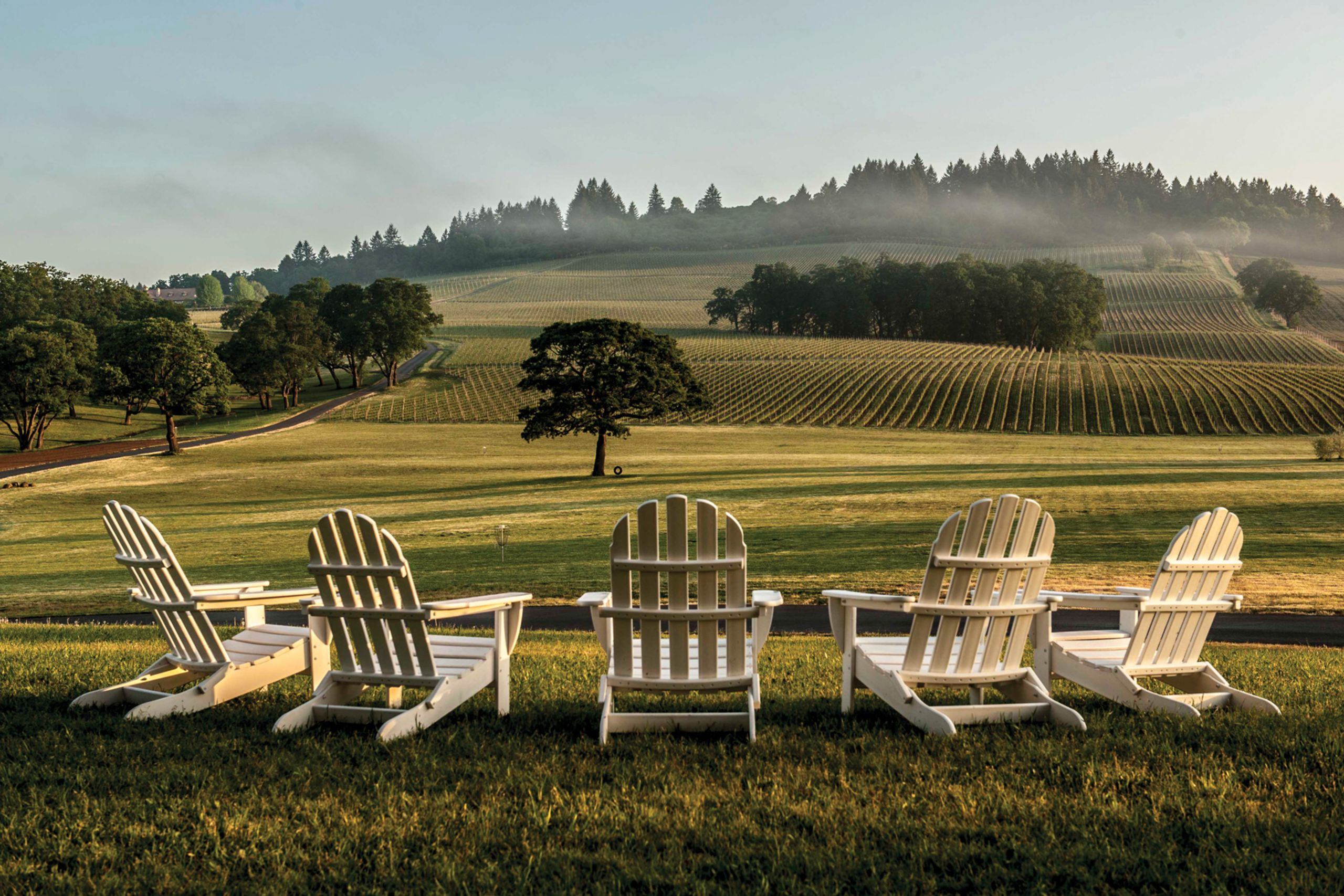 Beautiful Willamette Valley, home to some 500 wineries