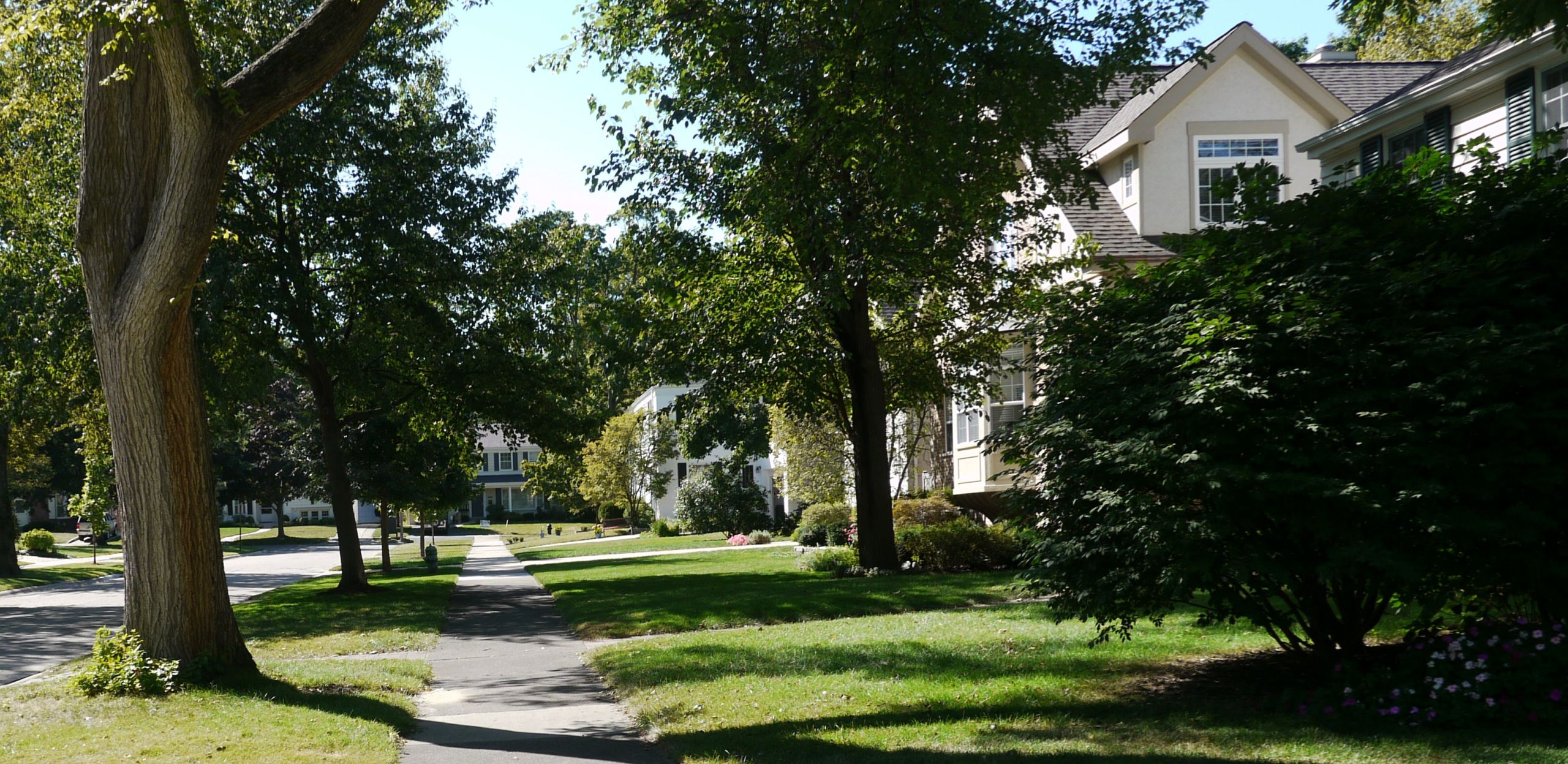 Enjoy Beautiful Tree Lined Streets in Park Ridge