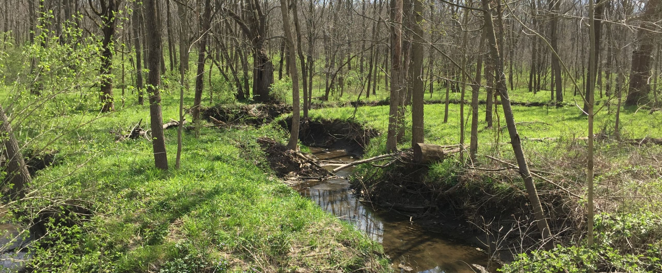Springtime in McLean County