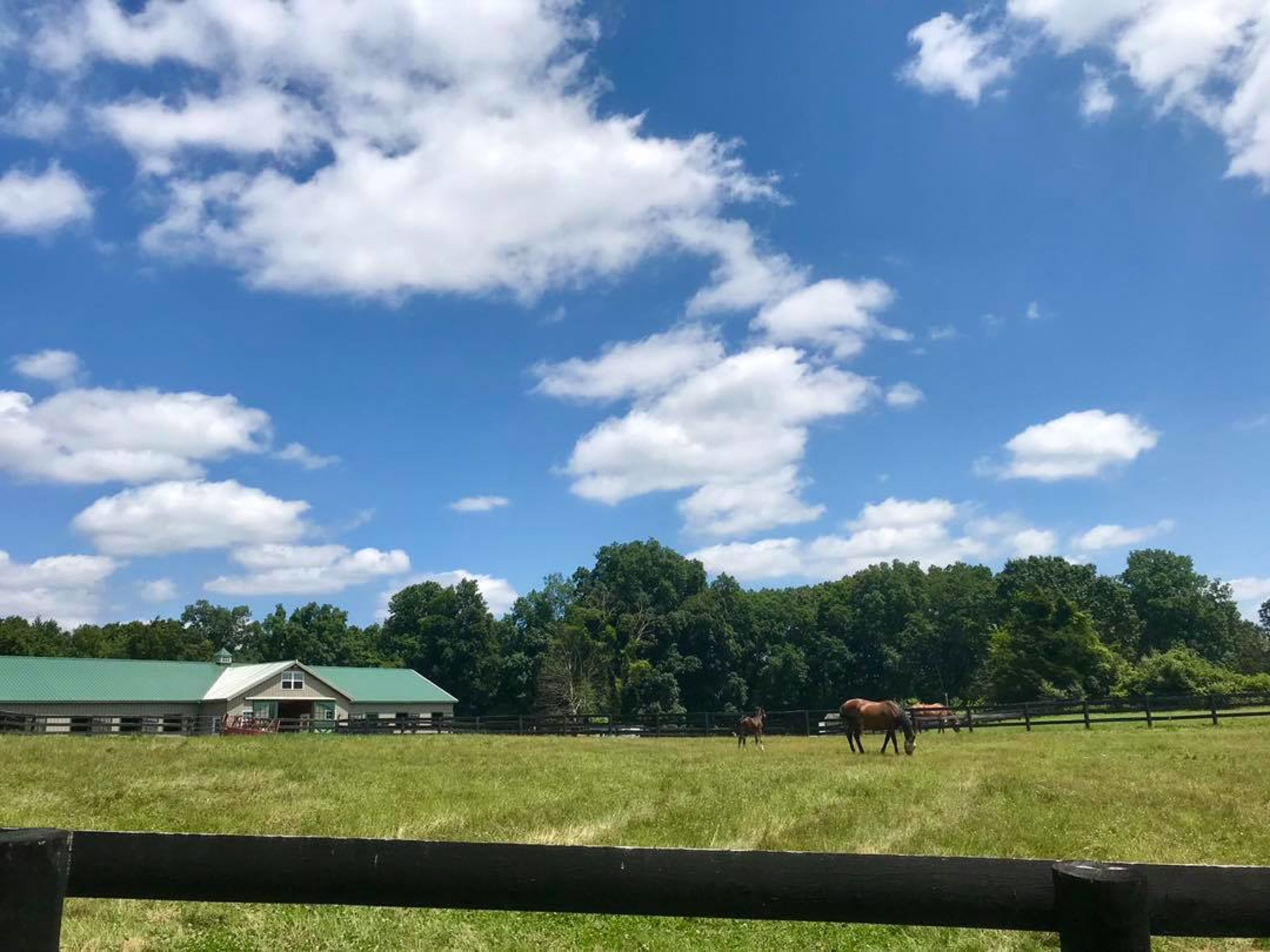 Horse Property / Equestrian Facilities