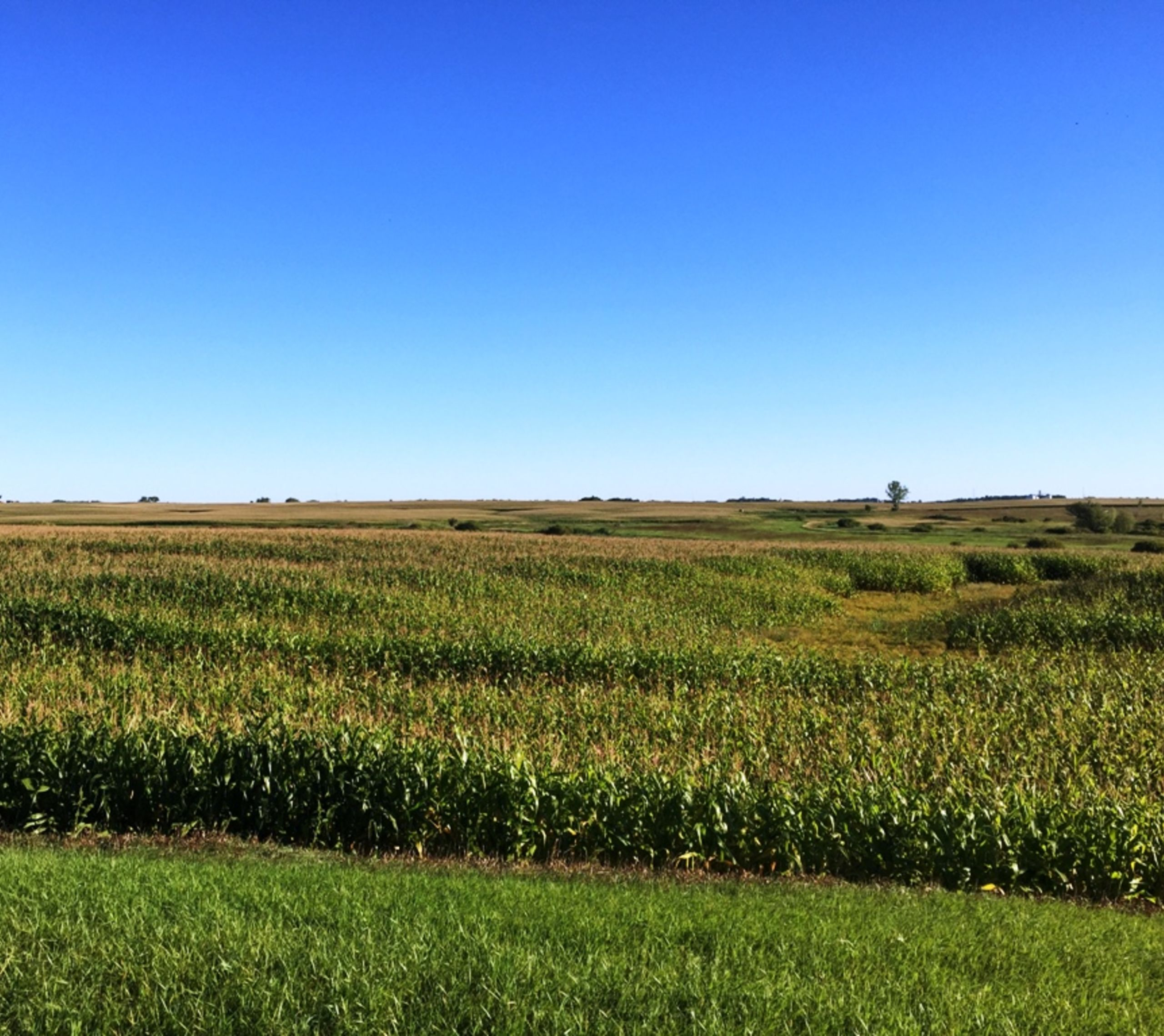Overlooking Farmland & Cornfield