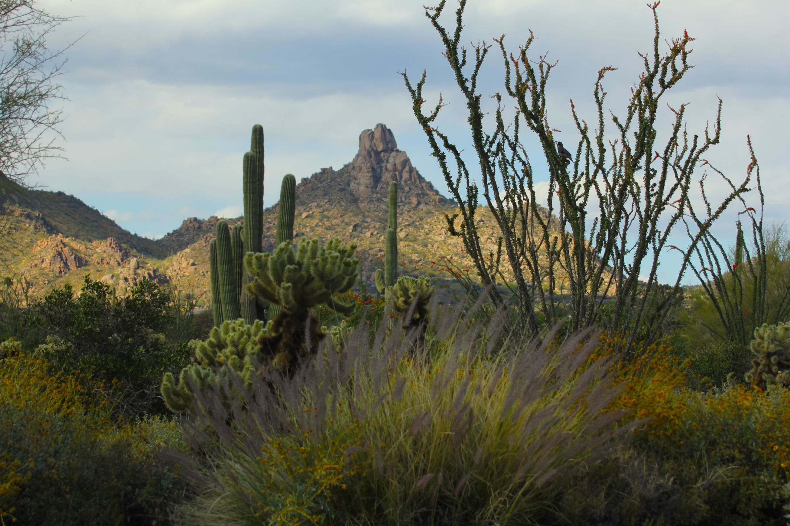 Pinnacle Peak in North Scottsdale