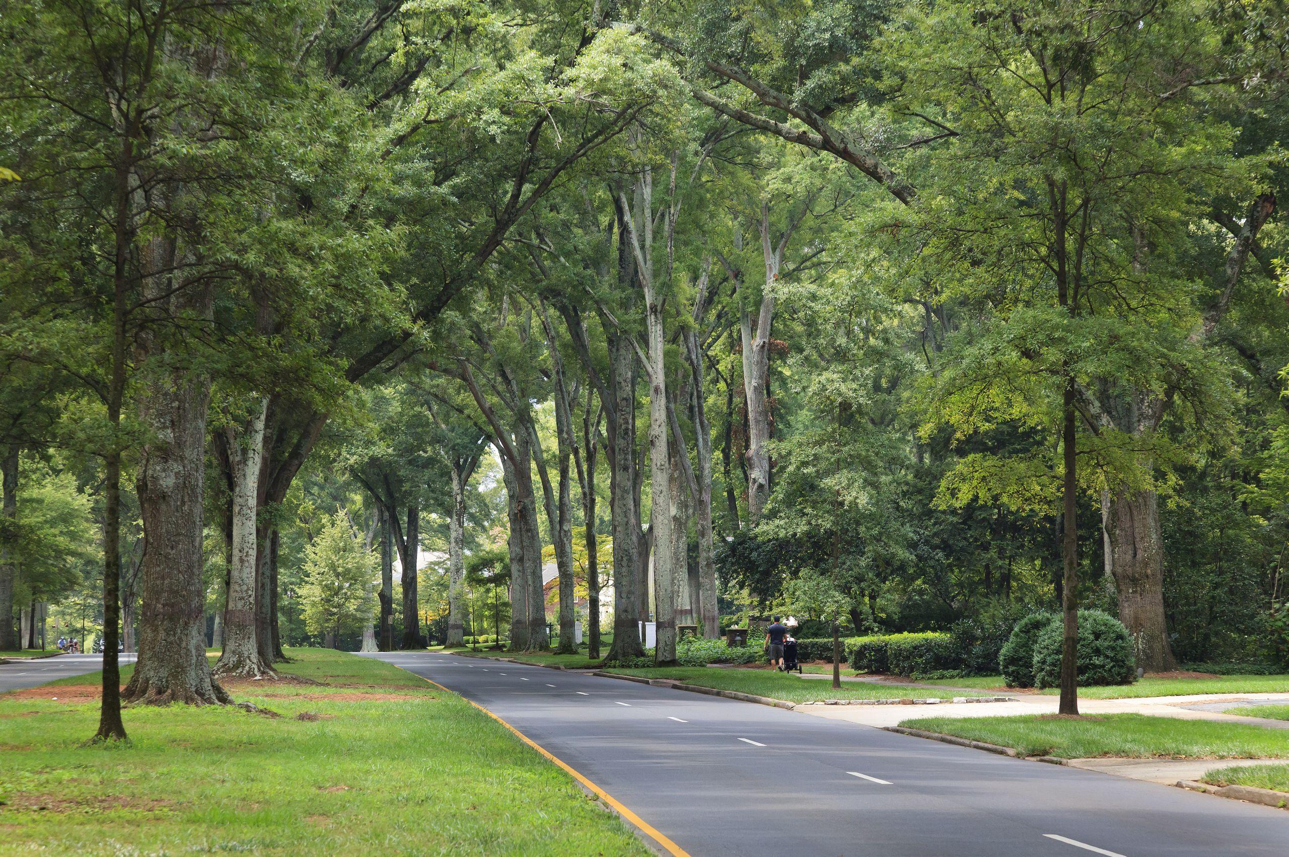 Queens Road in Myers Park