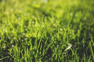 Taking Care of Your California Lawn Without Wasting Resources