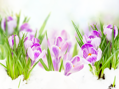 The New Spring Real Estate Market Is Here, Are You Ready For It?