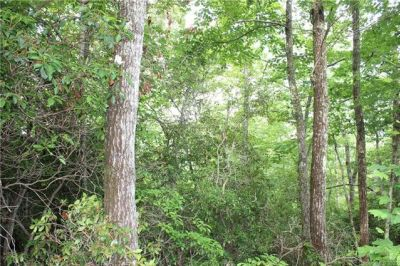 Bordering Pisgah National Forest | Lots for Sale in Mills River