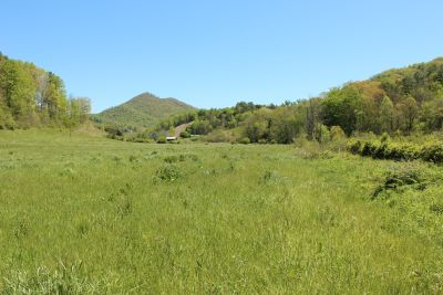 For Sale! Outstanding +-7.5 Acre Pasture in Madison County!