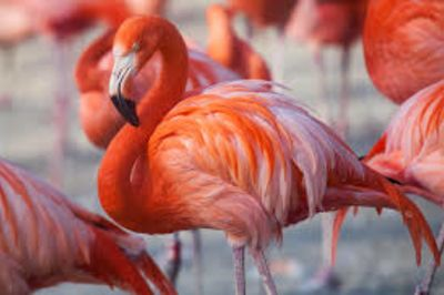 What Do Flamingos Have To Do With Real Estate?