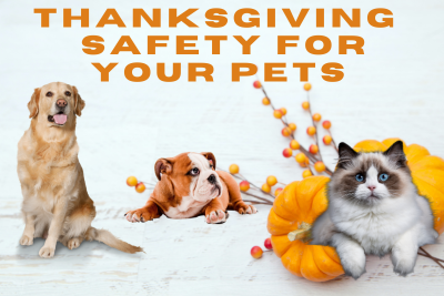 Thanksgiving Safety For Your Pets