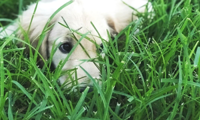 Attract Buyers with Pet-Friendly Yards
