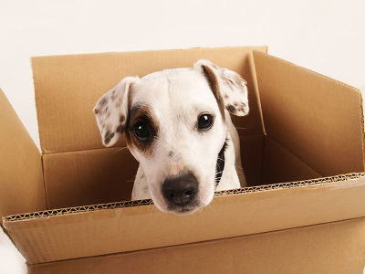 MAKING MOVING EASIER FOR YOUR DOG