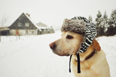 Winter Dog Tips