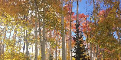 Best Park City Fall Hikes