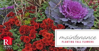 Landscaping that will provide fall and winter color