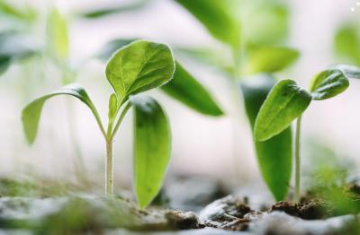 How To Create An Urban Garden: 17 Considerations