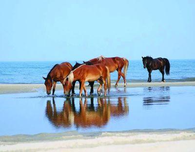 Wild Horse Tours NC