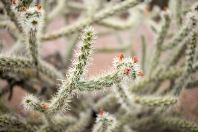 5 Tips for Caring for Your Cactus During the Winter