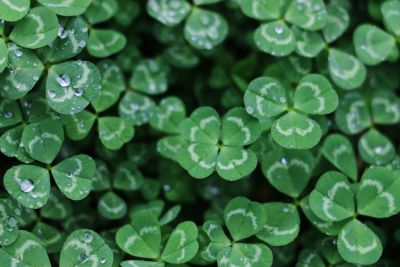 5 Things to Do for St. Patrick's Day 2020 in and Around Scottsdale