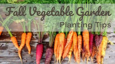 Fall Vegetable Garden Planting Tips