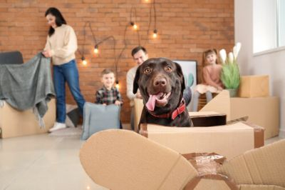 Make Moving With Pets Stress-Free