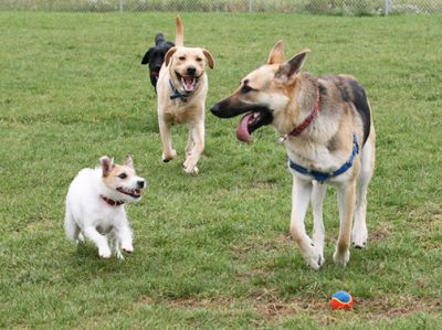 Belfast Dog Park